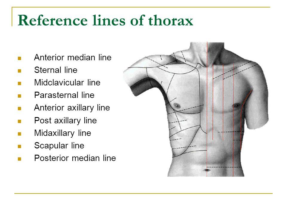 Reference lines of thorax Anterior median line Sternal line Midclavicular line Parasternal line Anterior axillary line Post axillary line Midaxillary line Scapular line Posterior median line