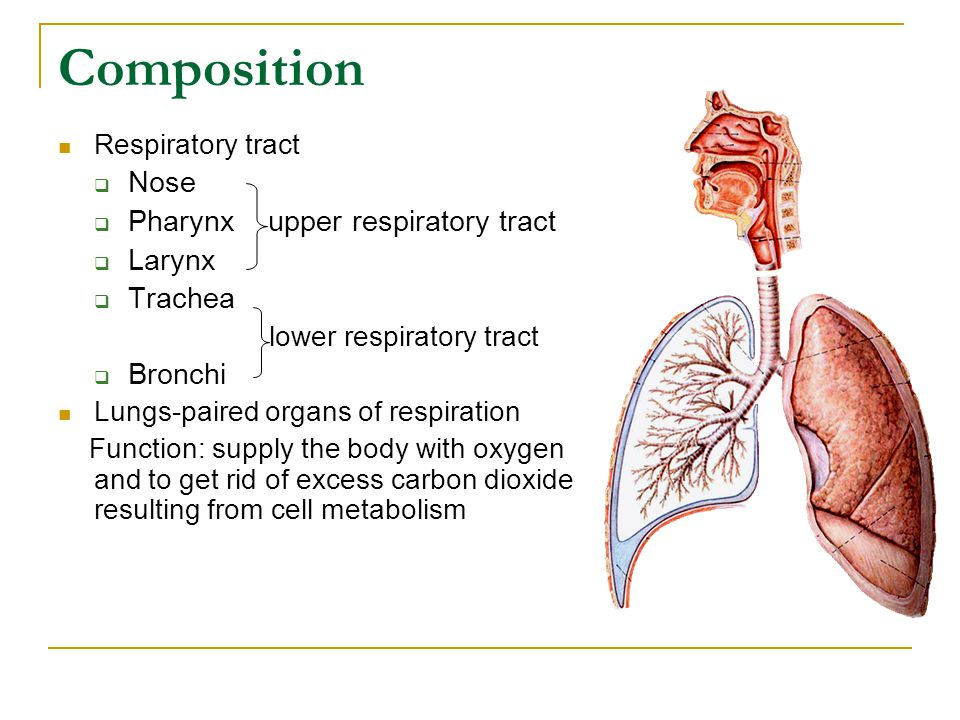 Composition Respiratory tract  Nose  Pharynx upper respiratory tract  Larynx  Trachea lower respiratory tract  Bronchi Lungs-paired organs of respiration Function: supply the body with oxygen and to get rid of excess carbon dioxide resulting from cell metabolism