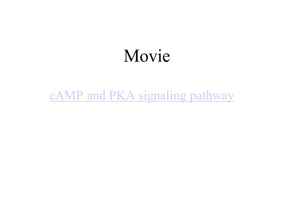 Movie cAMP and PKA signaling pathway