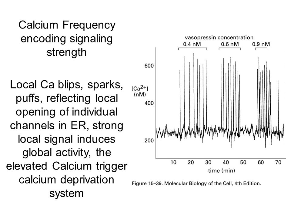 Calcium Frequency encoding signaling strength Local Ca blips, sparks, puffs, reflecting local opening of individual channels in ER, strong local signal induces global activity, the elevated Calcium trigger calcium deprivation system