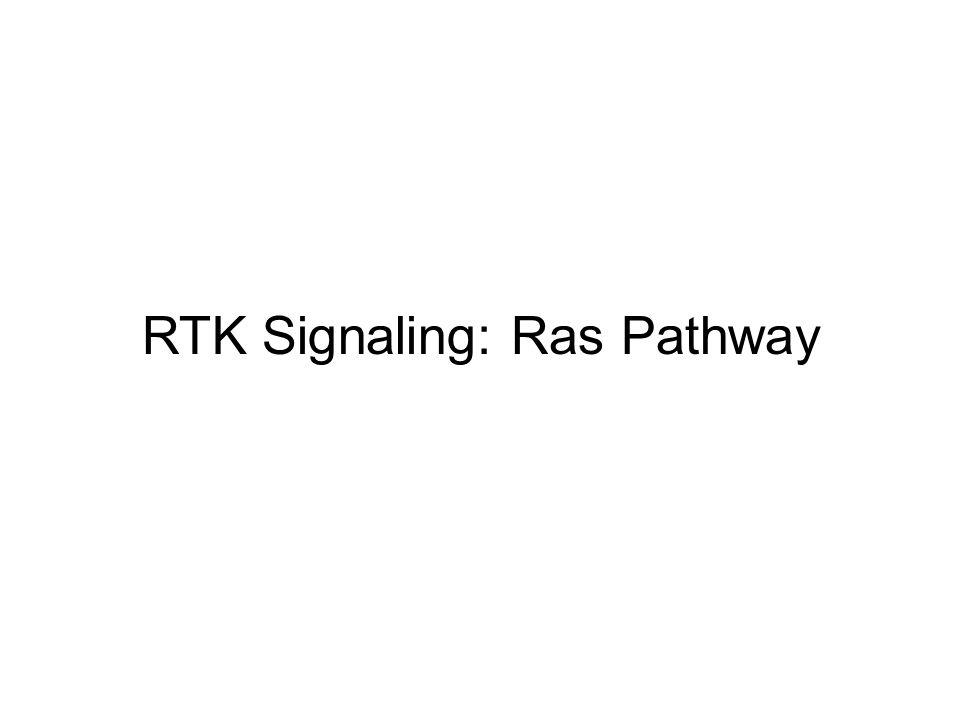 RTK Signaling: Ras Pathway