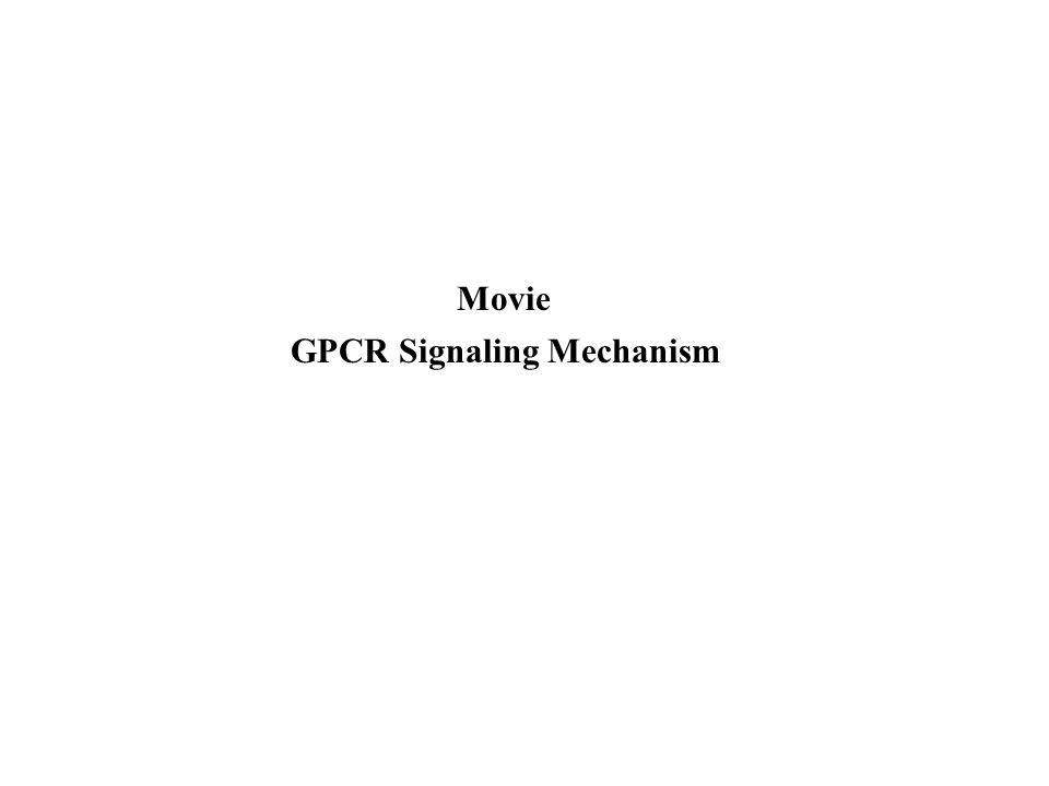 GPCR Signaling Mechanism Movie