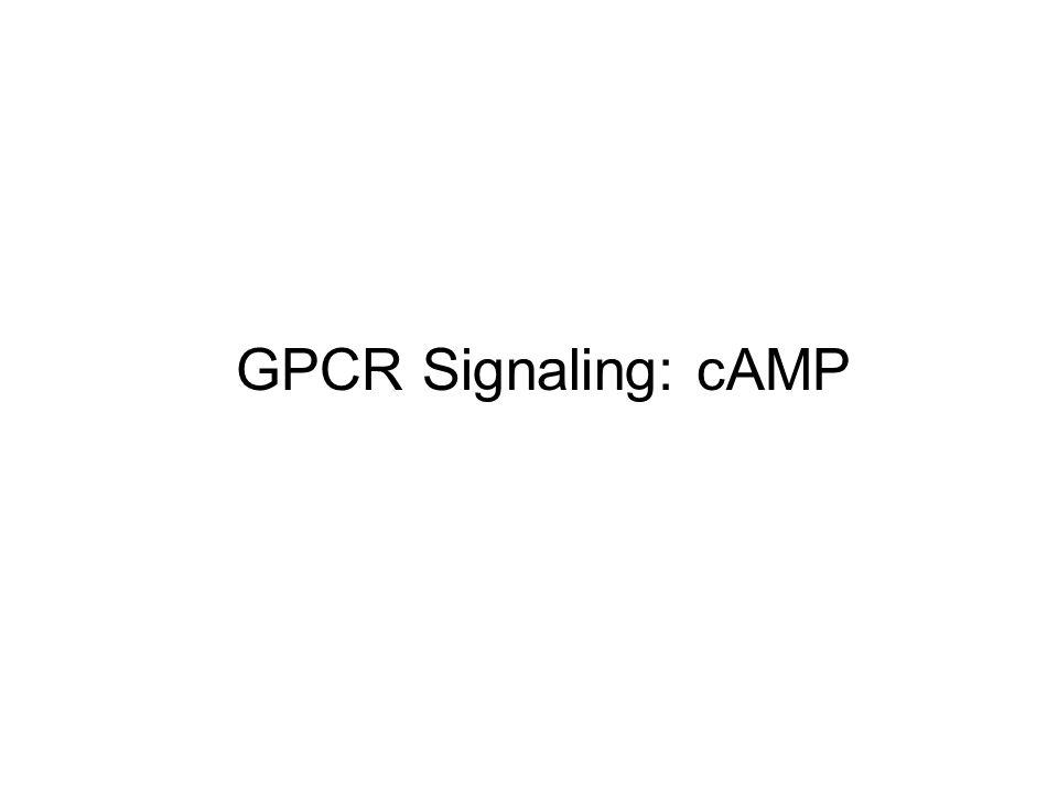 GPCR Signaling: cAMP