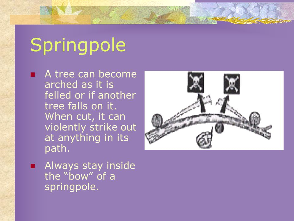 Springpole A tree can become arched as it is felled or if another tree falls on it.