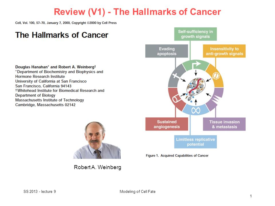 Review (V1) - The Hallmarks of Cancer SS 2013 - lecture 9 2 Modeling of Cell Fate