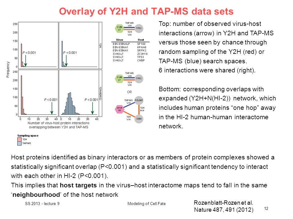 Overlay of Y2H and TAP-MS data sets SS 2013 - lecture 9 12 Modeling of Cell Fate Rozenblatt-Rozen et al.