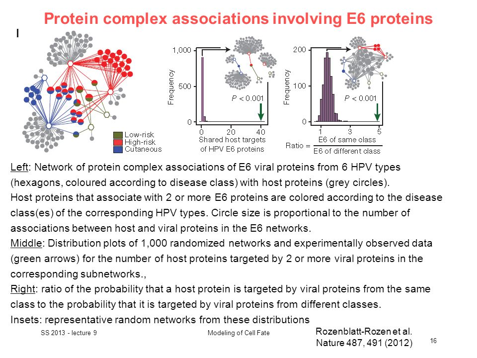 Protein complex associations involving E6 proteins SS 2013 - lecture 9 16 Modeling of Cell Fate Rozenblatt-Rozen et al.