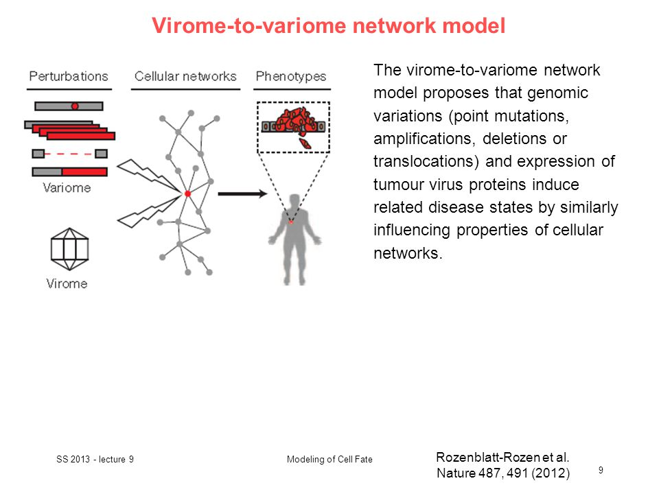 Virome-to-variome network model SS 2013 - lecture 9 9 Modeling of Cell Fate Rozenblatt-Rozen et al.
