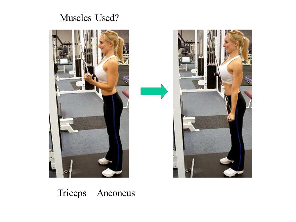 Muscles Used TricepsAnconeus