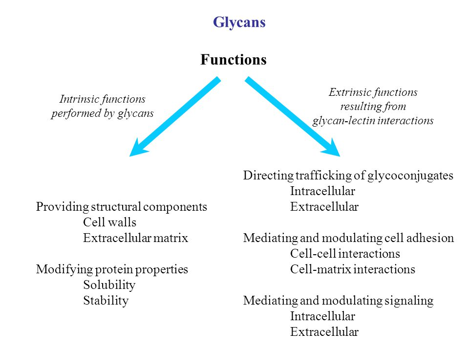 Providing structural components Cell walls Extracellular matrix Modifying protein properties Solubility Stability Directing trafficking of glycoconjug