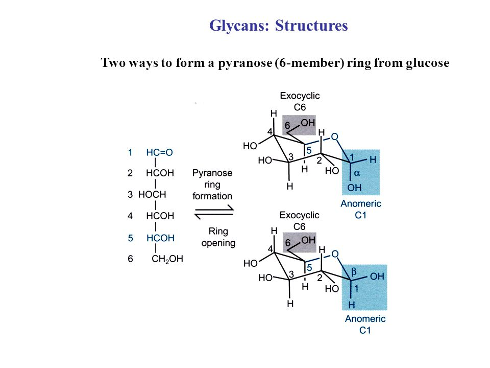 Two ways to form a pyranose (6-member) ring from glucose Glycans: Structures