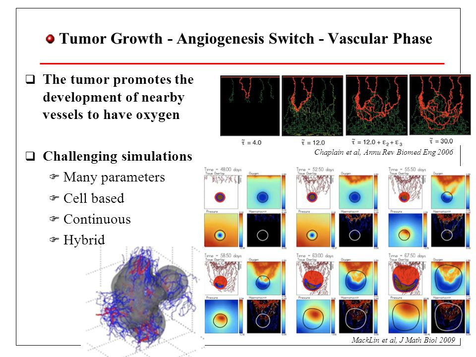 Tumor Growth - Angiogenesis Switch - Vascular Phase  The tumor promotes the development of nearby vessels to have oxygen  Challenging simulations  Many parameters  Cell based  Continuous  Hybrid MackLin et al, J Math Biol 2009 Chaplain et al, Annu Rev Biomed Eng 2006