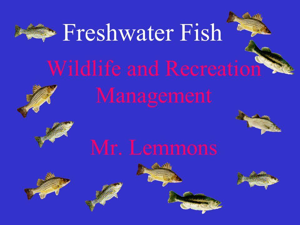 Wildlife and Recreation Management Mr. Lemmons Freshwater Fish