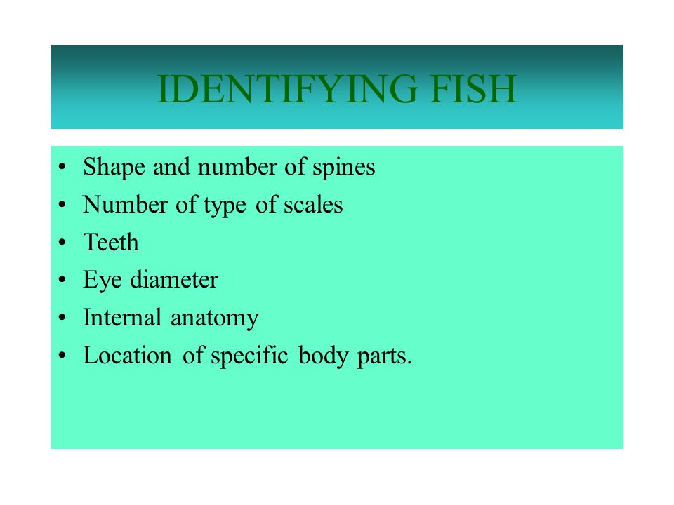 IDENTIFYING FISH Shape and number of spines Number of type of scales Teeth Eye diameter Internal anatomy Location of specific body parts.