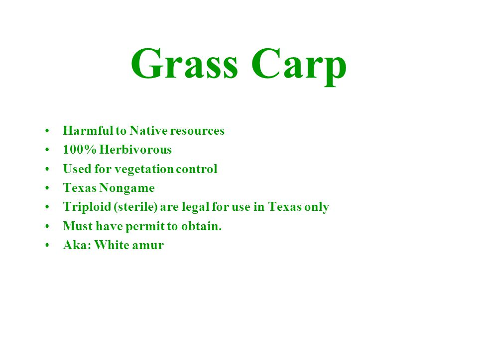 Harmful to Native resources 100% Herbivorous Used for vegetation control Texas Nongame Triploid (sterile) are legal for use in Texas only Must have pe