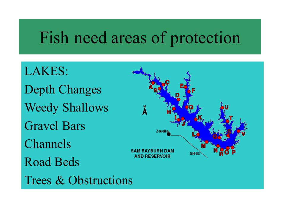 LAKES: Depth Changes Weedy Shallows Gravel Bars Channels Road Beds Trees & Obstructions Fish need areas of protection