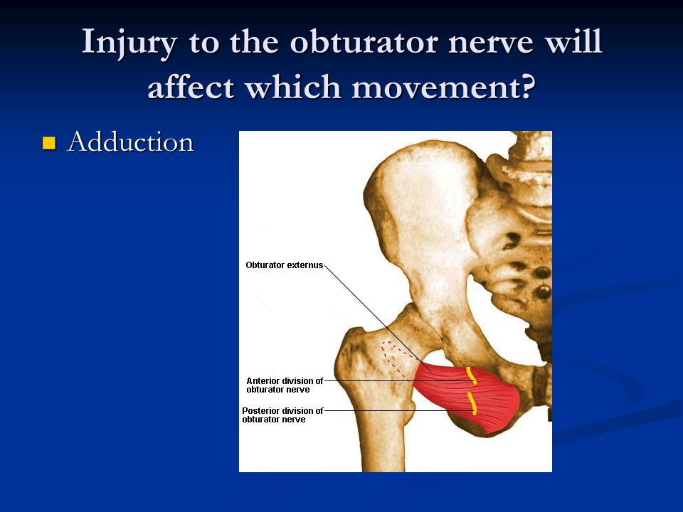Injury to the obturator nerve will affect which movement Adduction Adduction