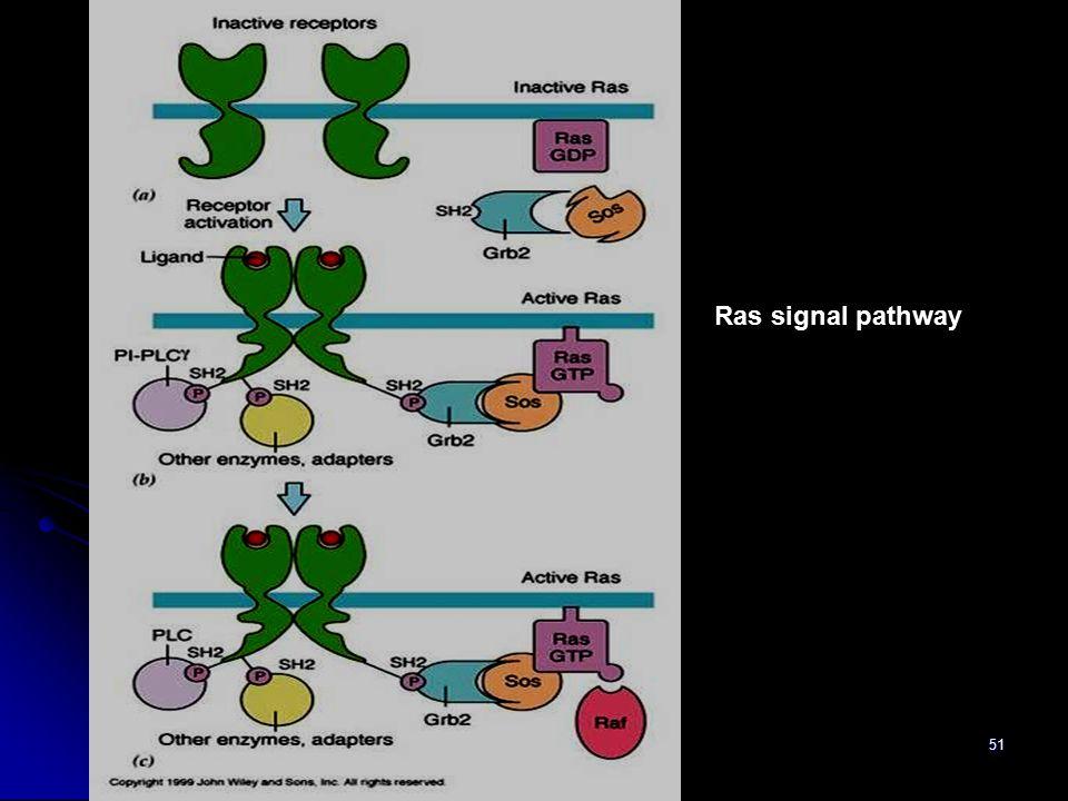 51 Ras signal pathway
