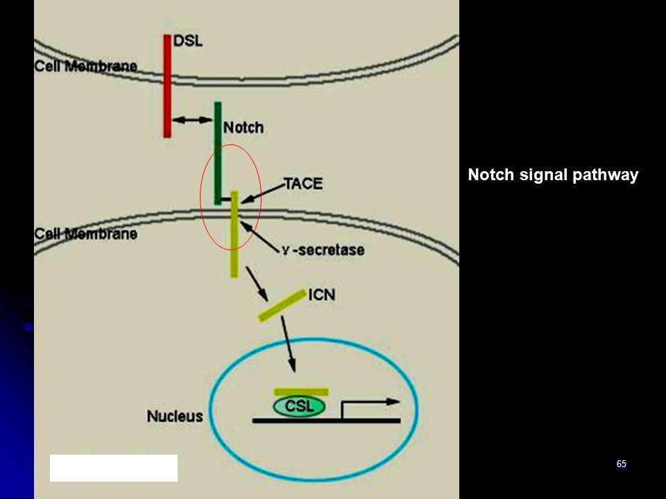 65 Notch signal pathway h