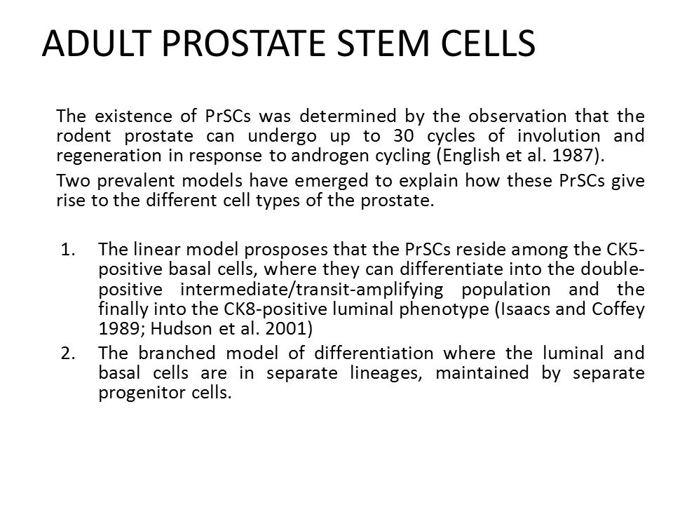 ADULT PROSTATE STEM CELLS The existence of PrSCs was determined by the observation that the rodent prostate can undergo up to 30 cycles of involution and regeneration in response to androgen cycling (English et al.