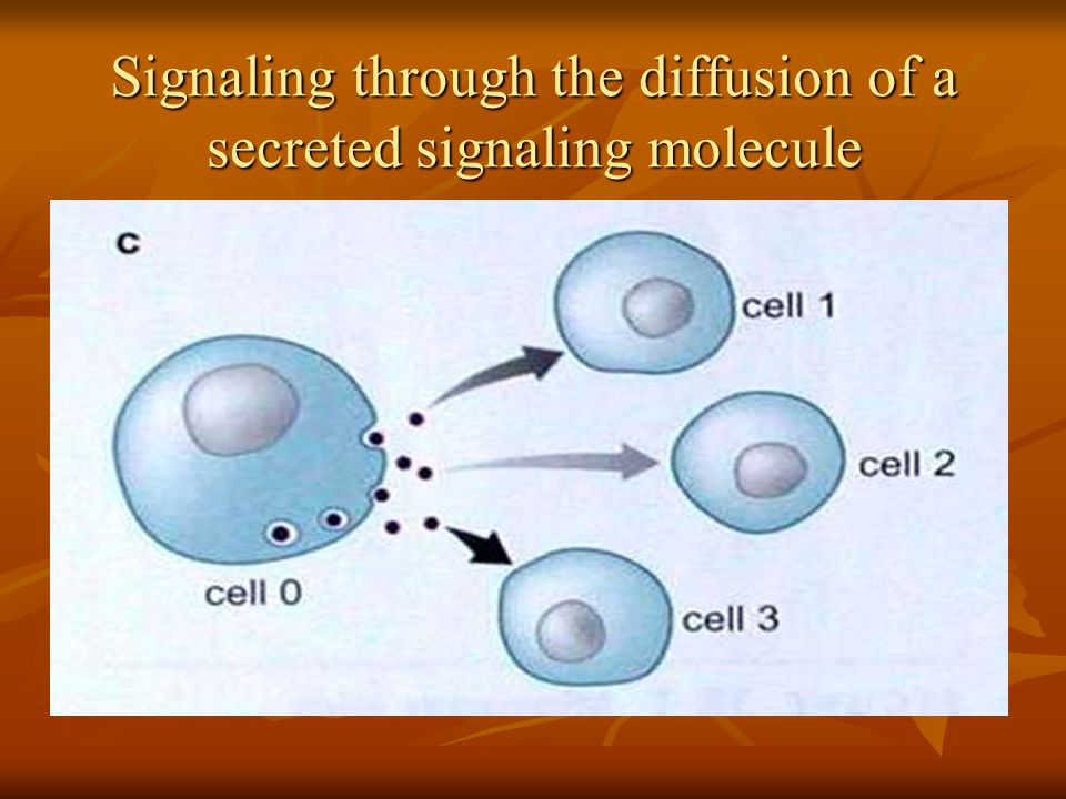 Signaling through the diffusion of a secreted signaling molecule