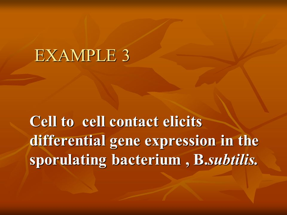 EXAMPLE 3 Cell to cell contact elicits differential gene expression in the sporulating bacterium, B.subtilis.