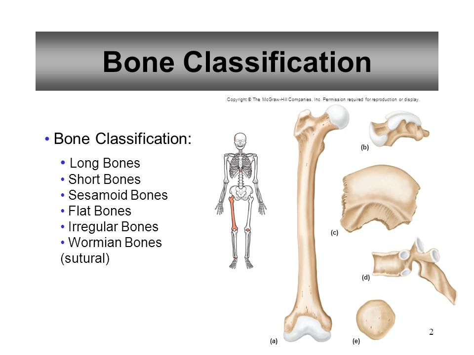 2 Bone Classification Bone Classification: Long Bones Short Bones Sesamoid Bones Flat Bones Irregular Bones Wormian Bones (sutural) (a)(e) (b) (c) (d)