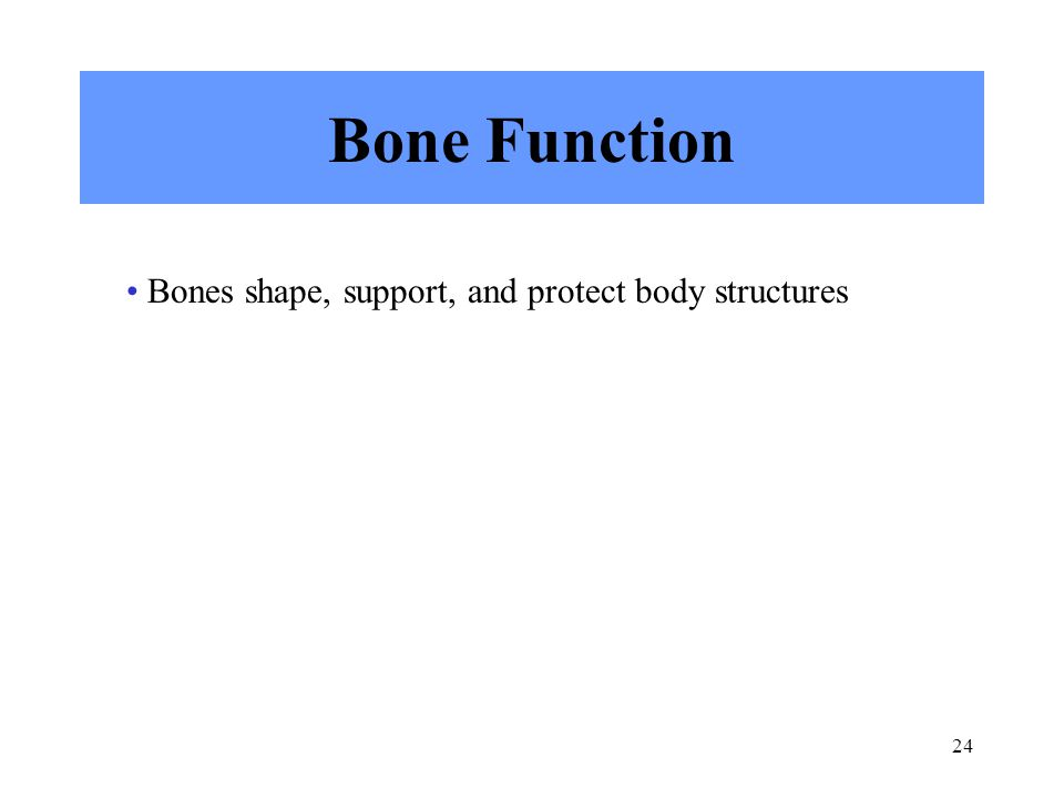 24 Bone Function Bones shape, support, and protect body structures