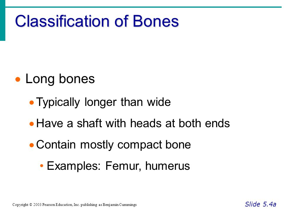 Classification of Bones Slide 5.4a Copyright © 2003 Pearson Education, Inc. publishing as Benjamin Cummings  Long bones  Typically longer than wide