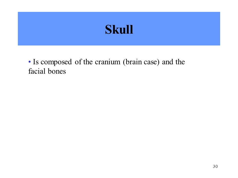 30 Skull Is composed of the cranium (brain case) and the facial bones