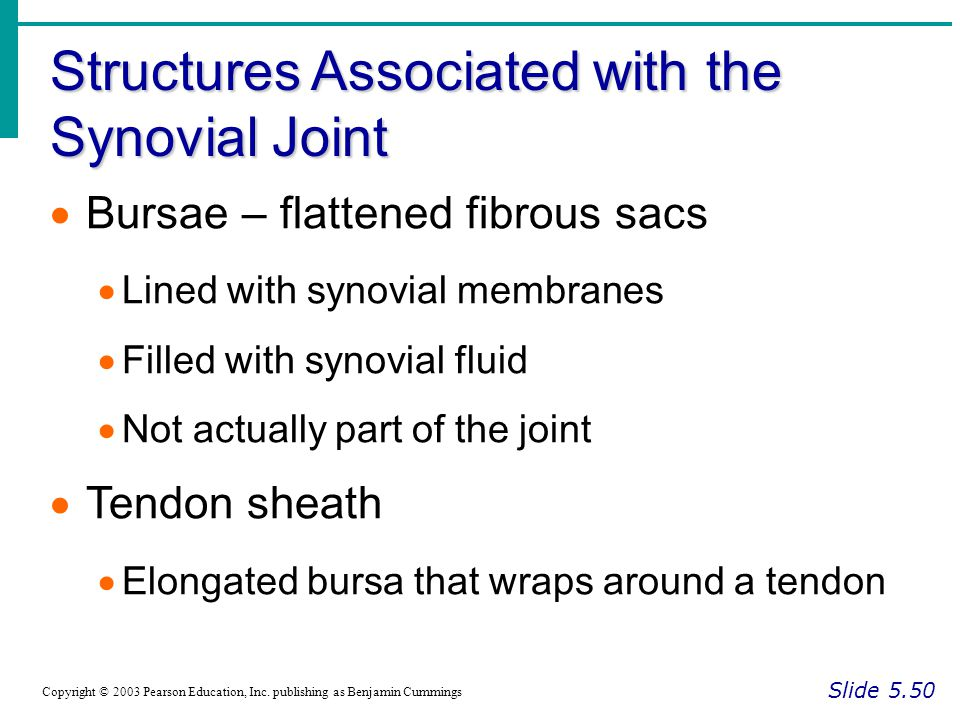 Structures Associated with the Synovial Joint Slide 5.50 Copyright © 2003 Pearson Education, Inc. publishing as Benjamin Cummings  Bursae – flattened