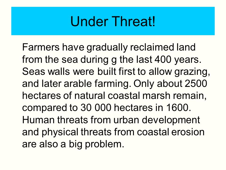 Under Threat! Farmers have gradually reclaimed land from the sea during g the last 400 years. Seas walls were built first to allow grazing, and later