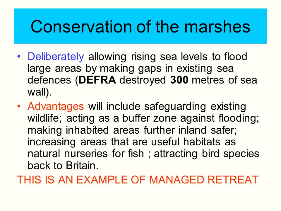 Conservation of the marshes Deliberately allowing rising sea levels to flood large areas by making gaps in existing sea defences (DEFRA destroyed 300