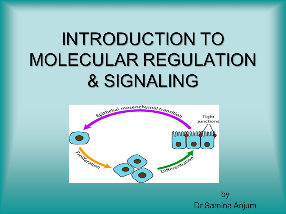 INTRODUCTION MOLECULAR GENETICS GENE TRANSCRIPTION INDUCTION & ORGAN FORMATION EPITHELIAL MESENCHYMAL INTERACTIONS CELL SIGNALING & GDFs