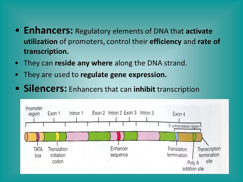 Enhancers: Regulatory elements of DNA that activate utilization of promoters, control their efficiency and rate of transcription. They can reside any