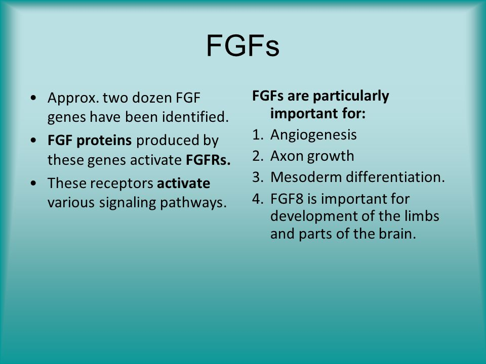 FGFs Approx. two dozen FGF genes have been identified. FGF proteins produced by these genes activate FGFRs. These receptors activate various signaling