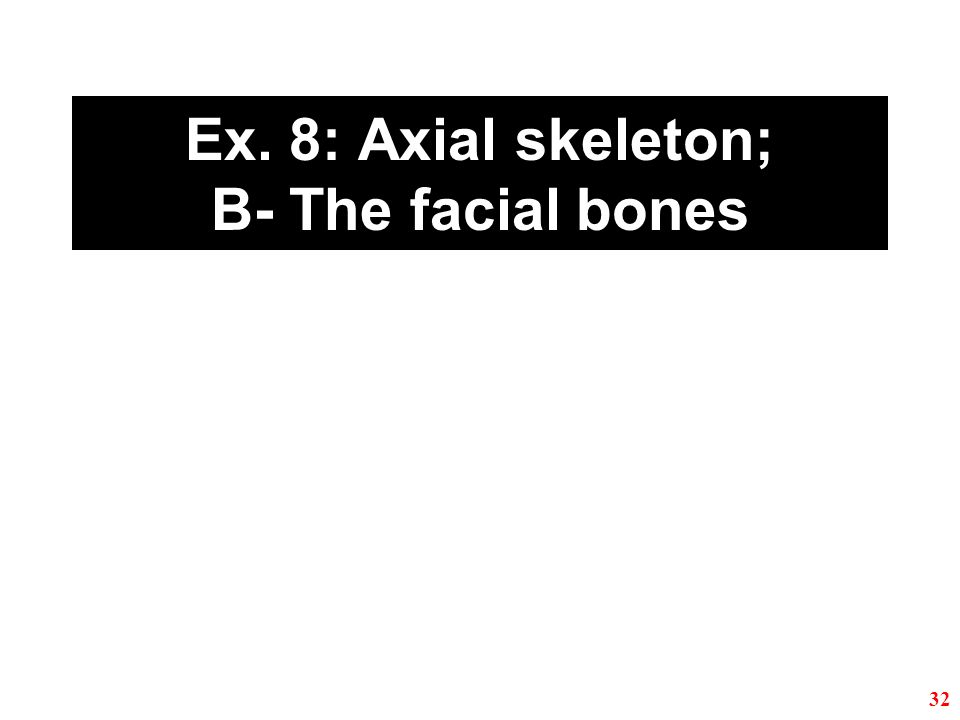 Ex. 8: Axial skeleton; B- The facial bones 32