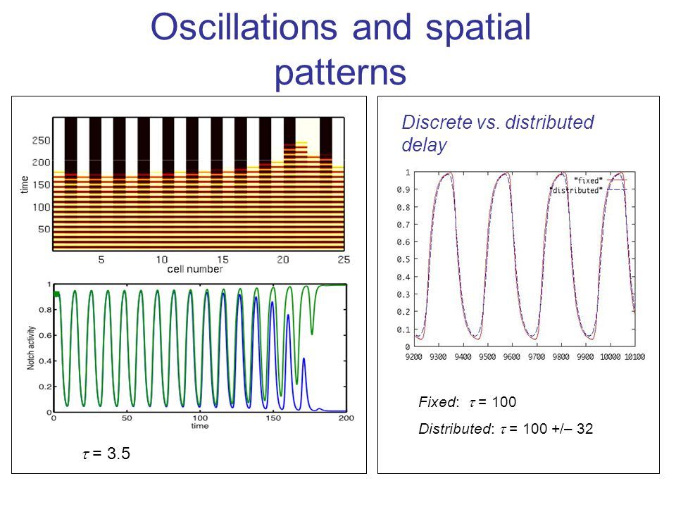 Oscillations and spatial patterns  = 3.5 Fixed:  = 100 Distributed:  = 100 +/– 32 Discrete vs.