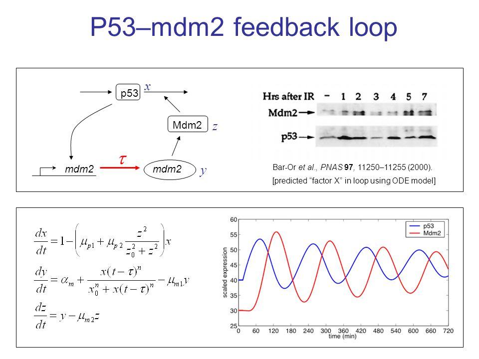 P53–mdm2 feedback loop Bar-Or et al., PNAS 97, 11250–11255 (2000).
