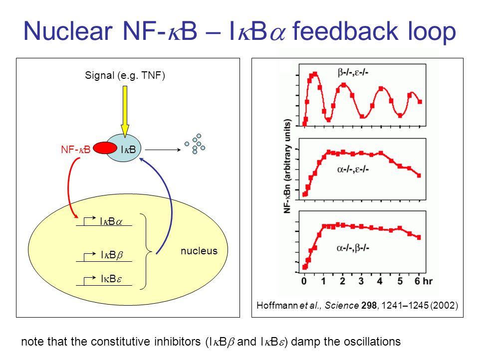 Nuclear NF-  B – I  B  feedback loop IBIB IBIB IBIB IBIBNF-  B Signal (e.g.