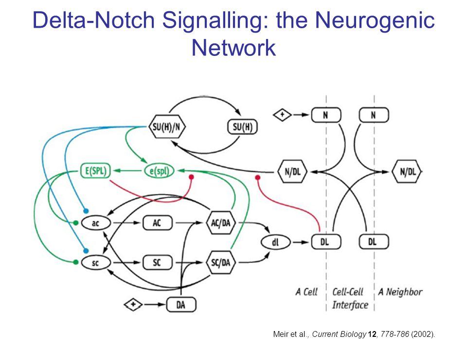Delta-Notch Signalling: the Neurogenic Network Meir et al., Current Biology 12, 778-786 (2002).