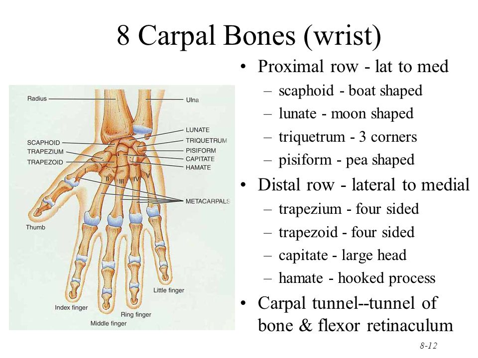 8-12 8 Carpal Bones (wrist) Proximal row - lat to med –scaphoid - boat shaped –lunate - moon shaped –triquetrum - 3 corners –pisiform - pea shaped Dis