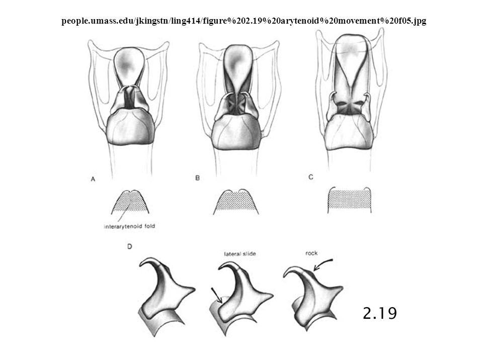 people.umass.edu/jkingstn/ling414/figure%202.19%20arytenoid%20movement%20f05.jpg