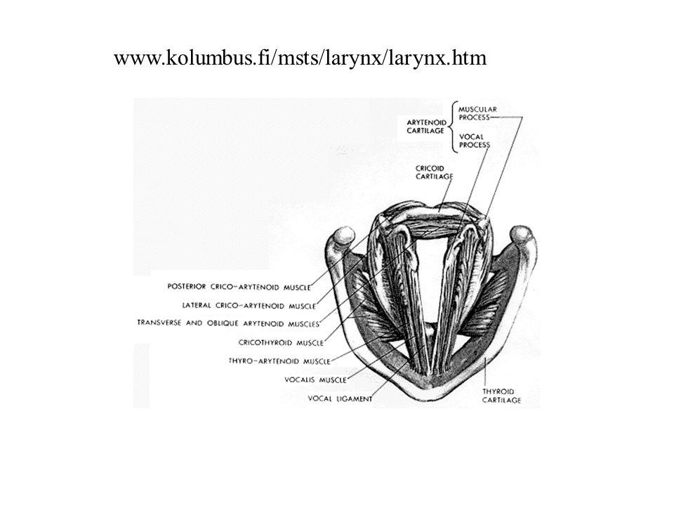 www.kolumbus.fi/msts/larynx/larynx.htm
