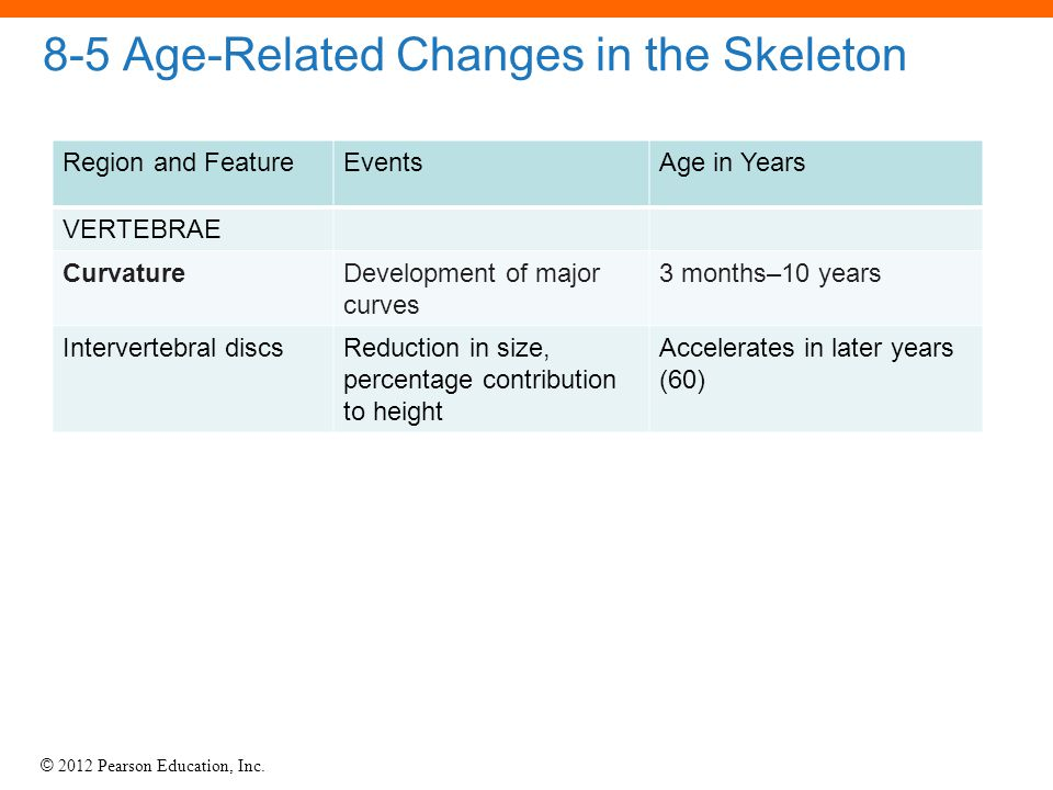 © 2012 Pearson Education, Inc. 8-5 Age-Related Changes in the Skeleton Region and FeatureEventsAge in Years VERTEBRAE CurvatureDevelopment of major cu