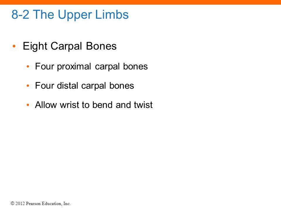 © 2012 Pearson Education, Inc. 8-2 The Upper Limbs Eight Carpal Bones Four proximal carpal bones Four distal carpal bones Allow wrist to bend and twis