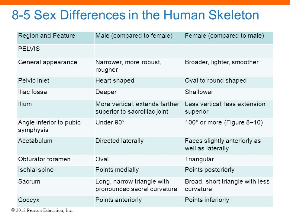 © 2012 Pearson Education, Inc. 8-5 Sex Differences in the Human Skeleton PELVIS Region and FeatureMale (compared to female)Female (compared to male) G