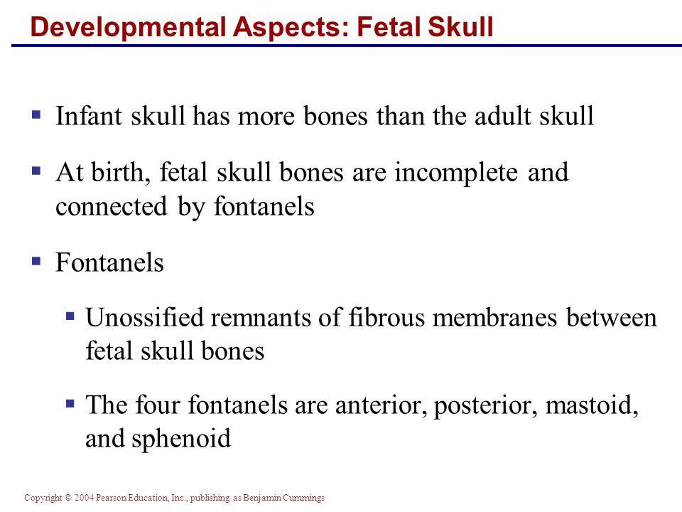 Copyright © 2004 Pearson Education, Inc., publishing as Benjamin Cummings Developmental Aspects: Fetal Skull  Skull bones such as the mandible and maxilla are unfused Figure 7.33