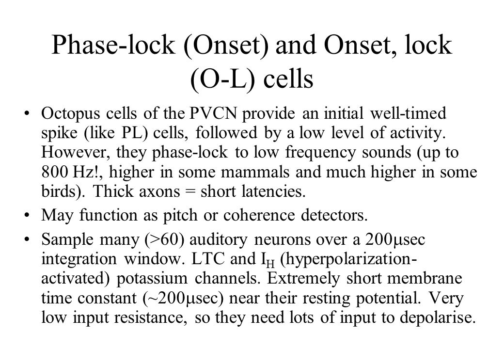 Phase-lock (Onset) and Onset, lock (O-L) cells Octopus cells of the PVCN provide an initial well-timed spike (like PL) cells, followed by a low level of activity.
