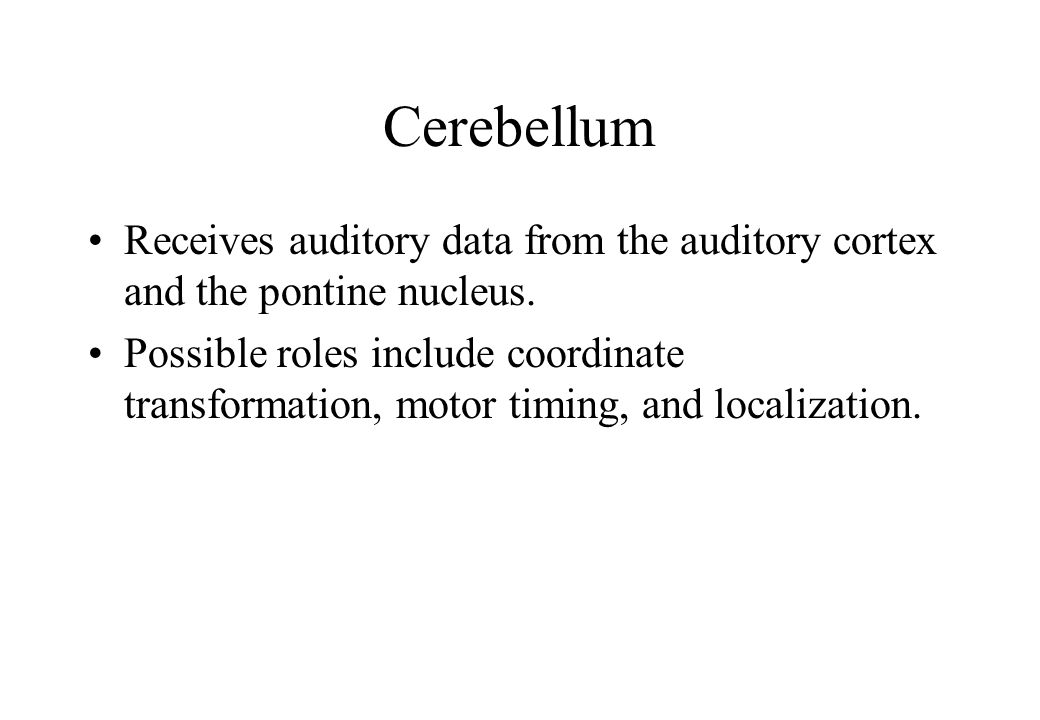 Cerebellum Receives auditory data from the auditory cortex and the pontine nucleus.